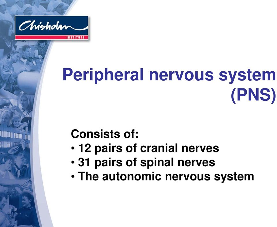 cranial nerves 31 pairs of