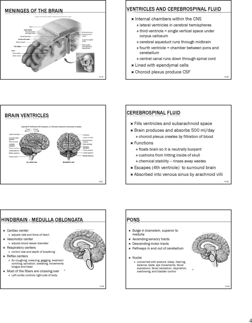 CSF 14-20 BRAIN VENTRICLES CEREBROSPINAL FLUID Fills ventricles and subarachnoid space Brain produces and absorbs 500 ml/day choroid plexus creates by filtration of blood Functions floats brain so it