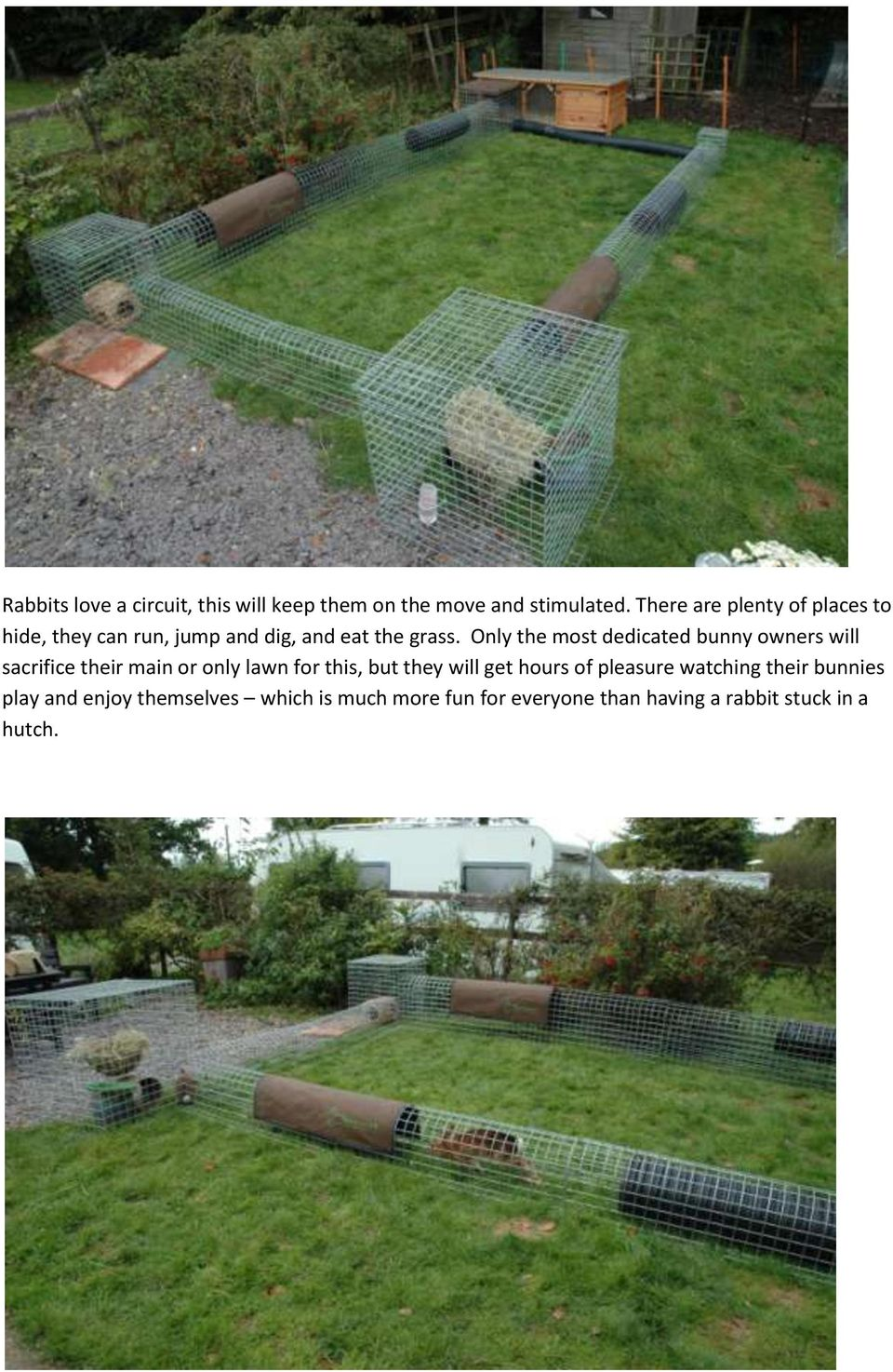 Only the most dedicated bunny owners will sacrifice their main or only lawn for this, but they will