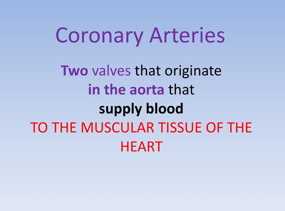 the aorta that supply blood
