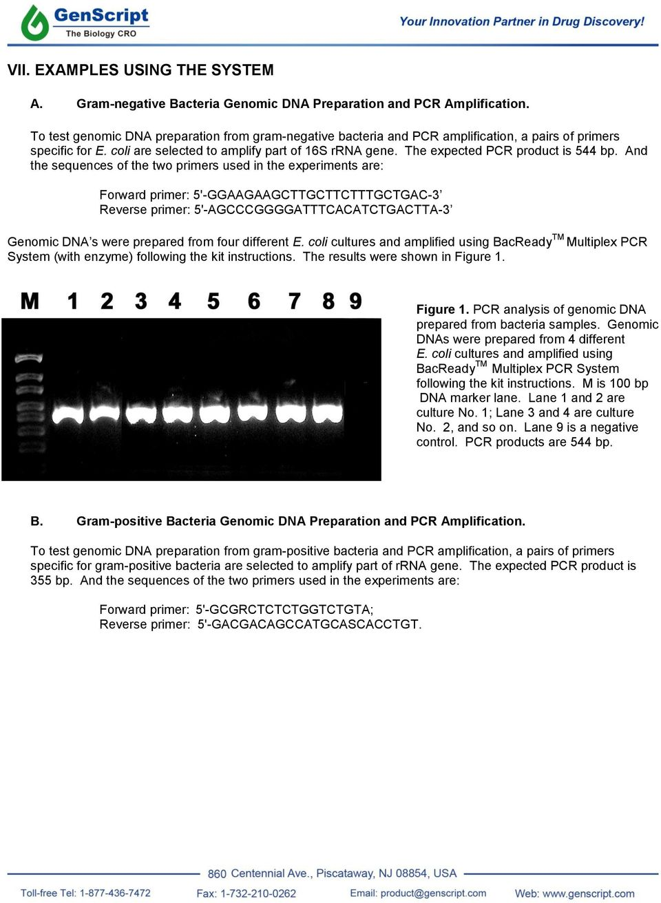 The expected PCR product is 544 bp.