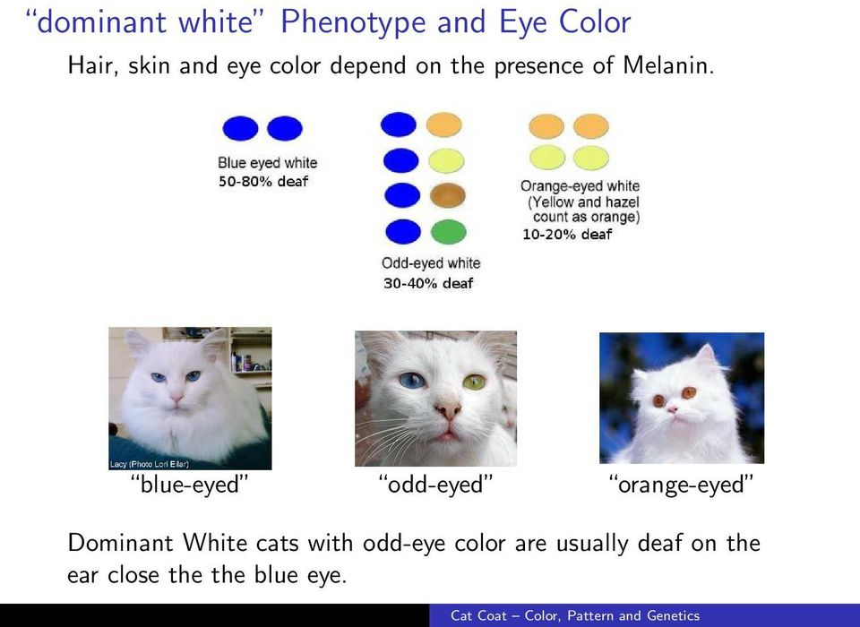 blue-eyed odd-eyed orange-eyed Dominant White cats