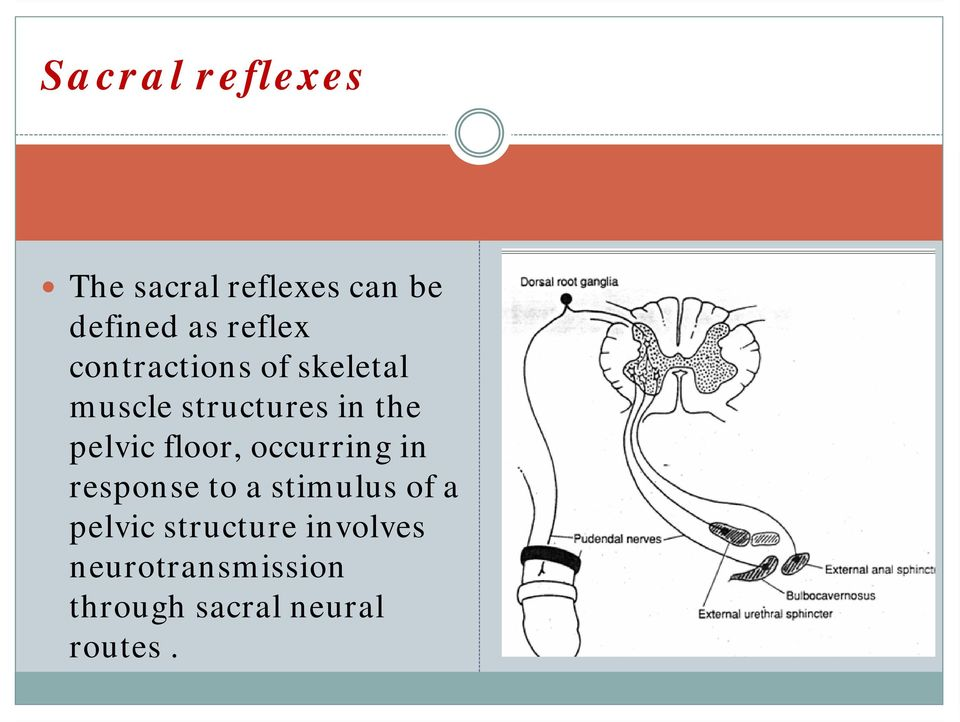 pelvic floor, occurring in response to a stimulus of a