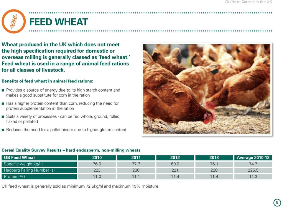 Benefits of feed wheat in animal feed rations: n Provides a source of energy due to its high starch content and makes a good substitute for corn in the ration n Has a higher protein content than