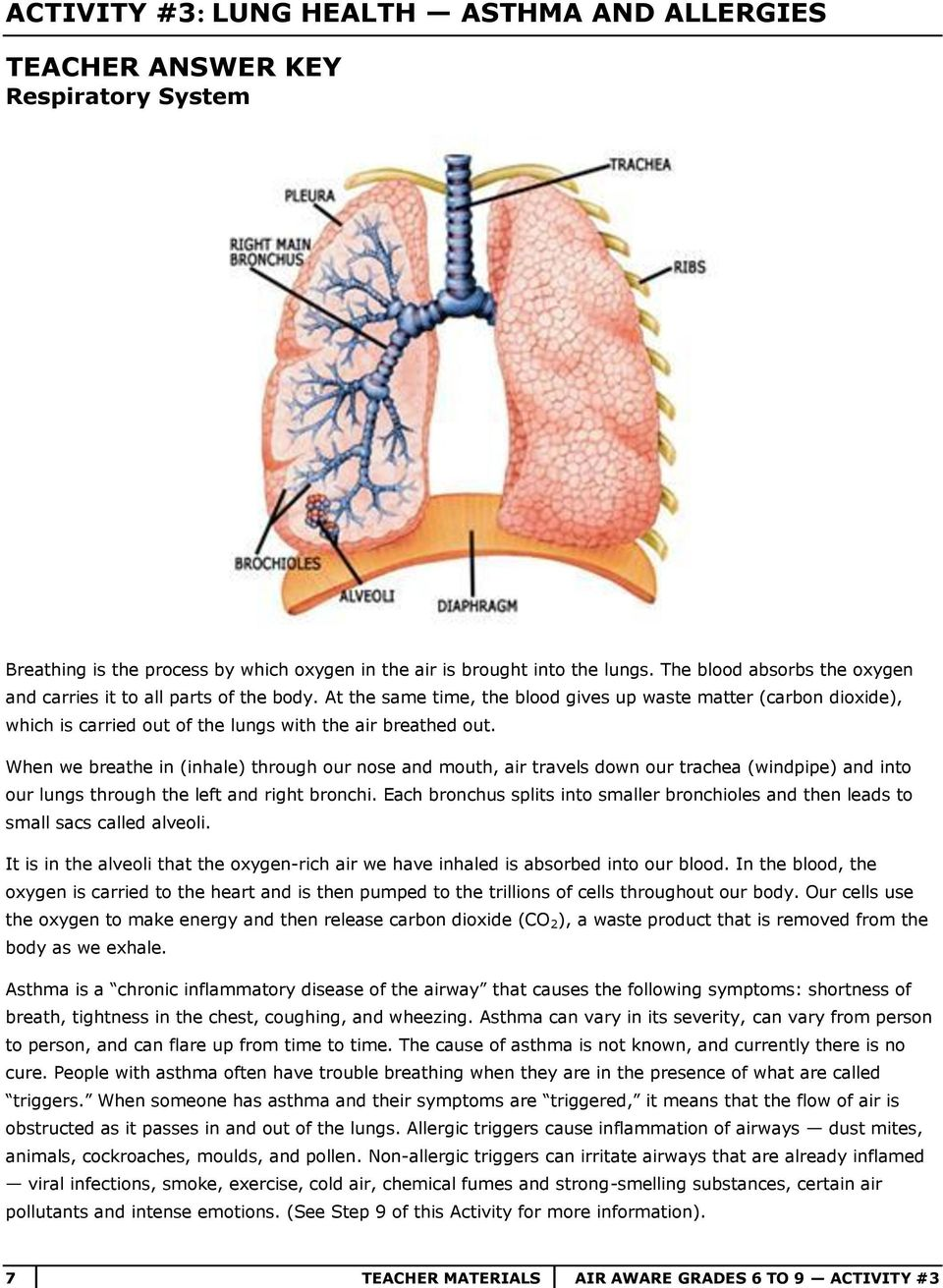 When we breathe in (inhale) through our nose and mouth, air travels down our trachea (windpipe) and into our lungs through the left and right bronchi.