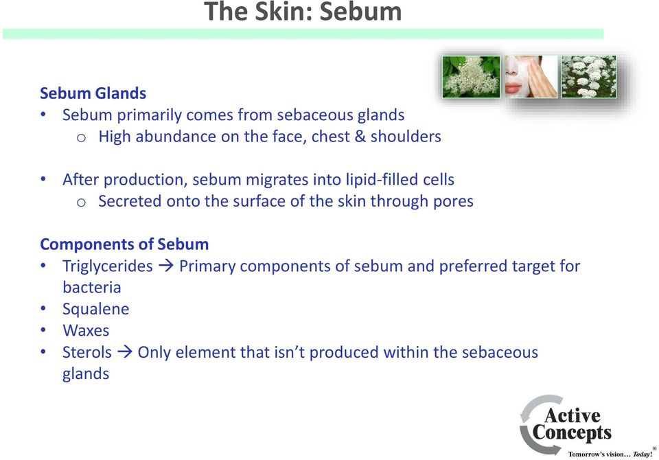 of the skin through pores Components of Sebum Triglycerides Primary components of sebum and preferred