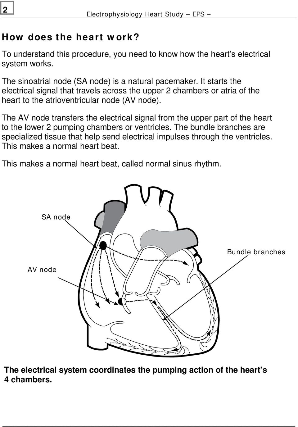 The AV node transfers the electrical signal from the upper part of the heart to the lower 2 pumping chambers or ventricles.
