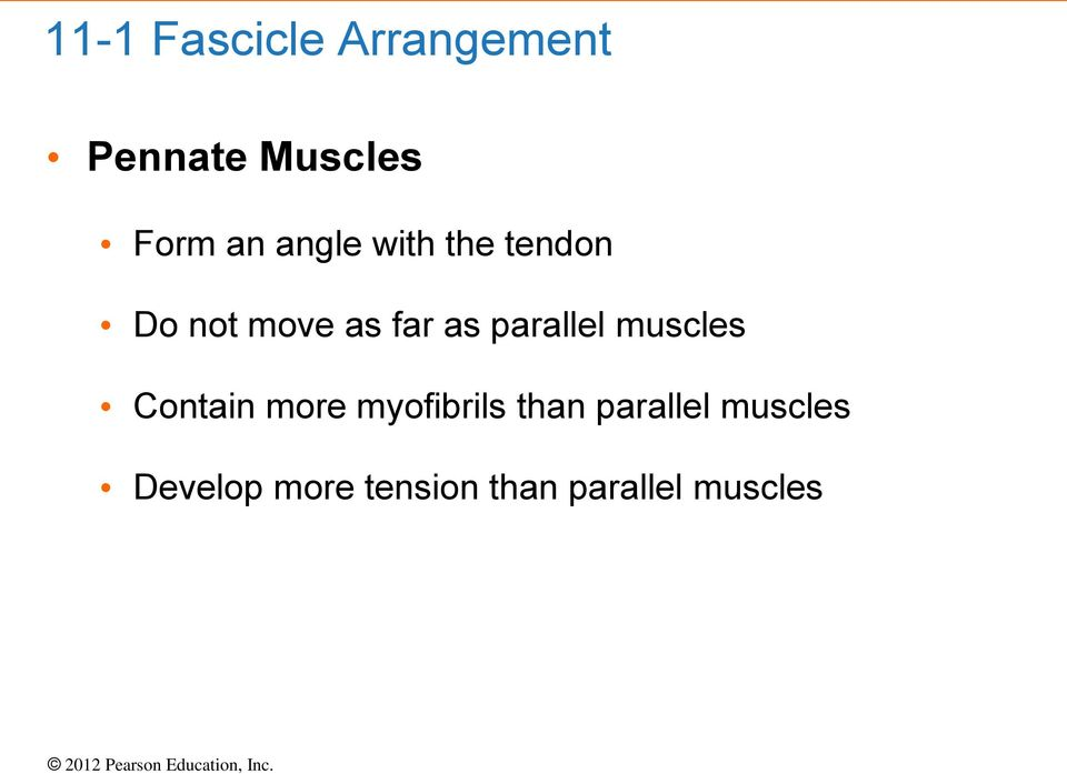 parallel muscles Contain more myofibrils than