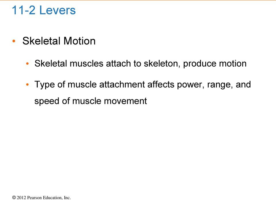 motion Type of muscle attachment