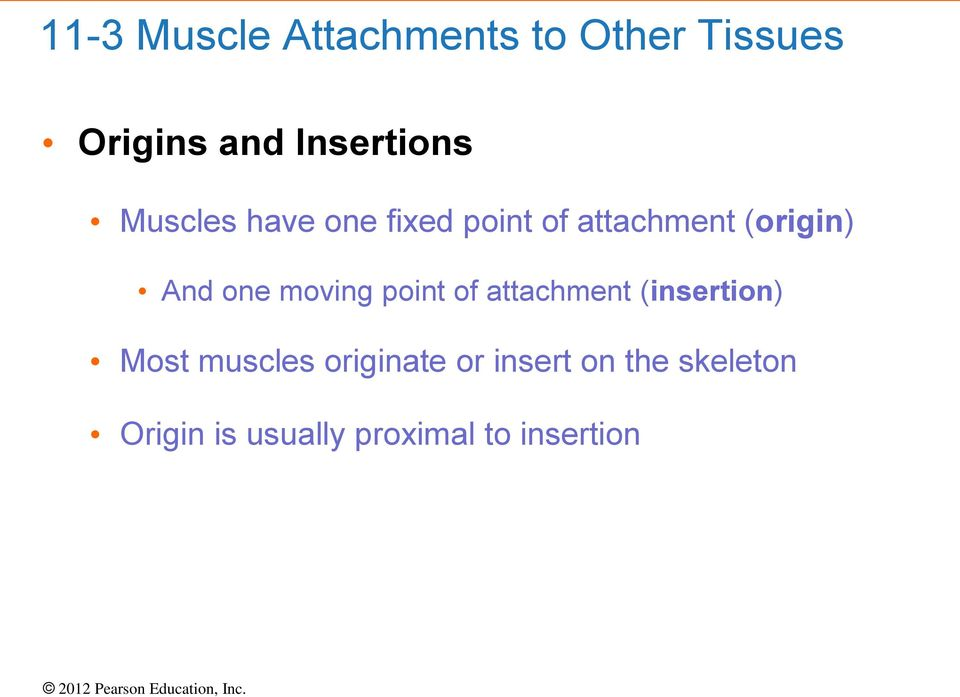 And one moving point of attachment (insertion) Most muscles