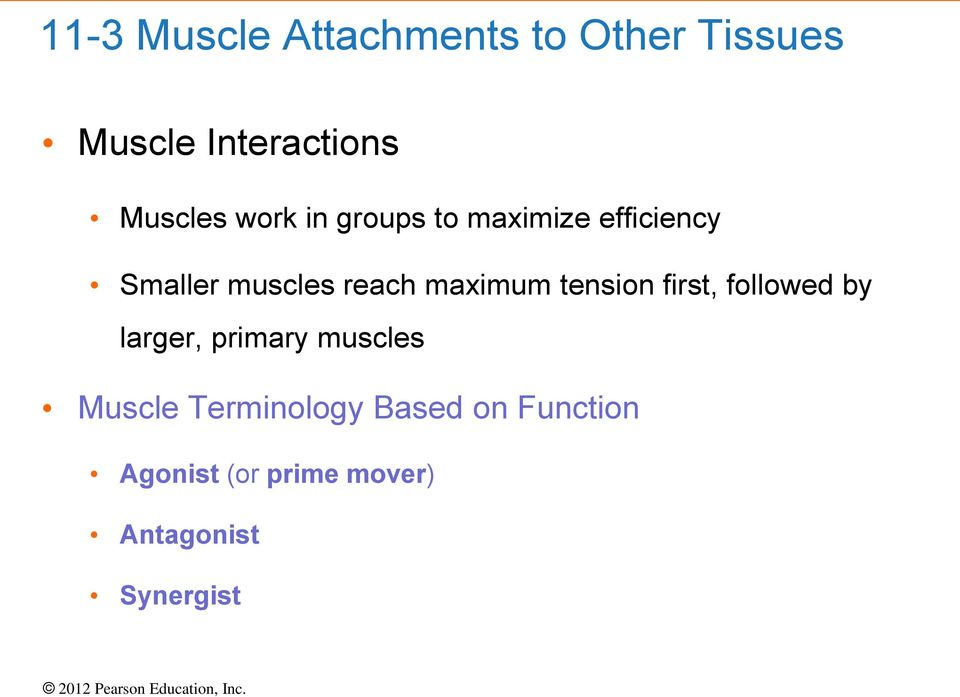 maximum tension first, followed by larger, primary muscles Muscle