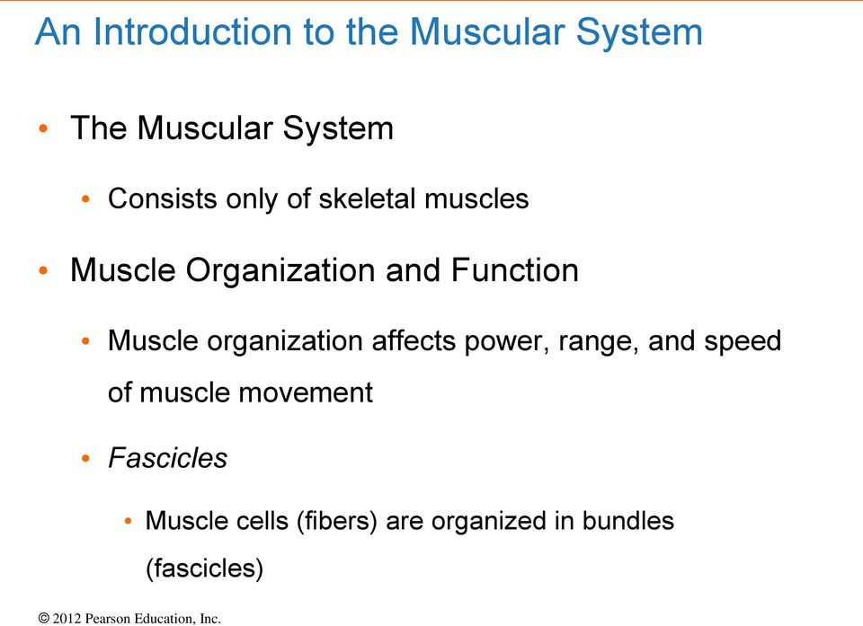 Muscle organization affects power, range, and speed of muscle