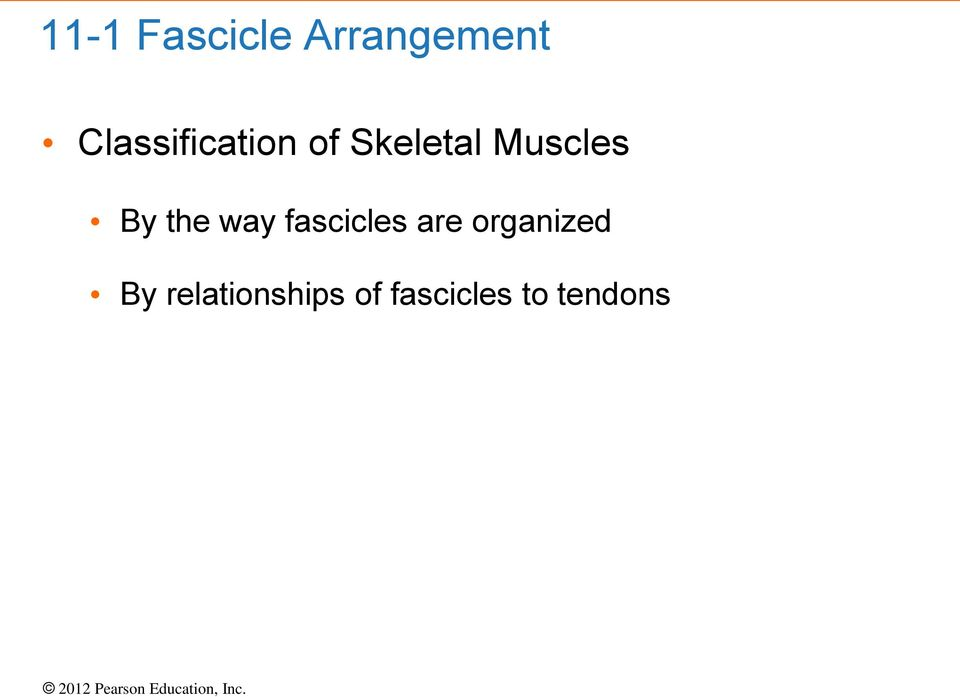 Muscles By the way fascicles are