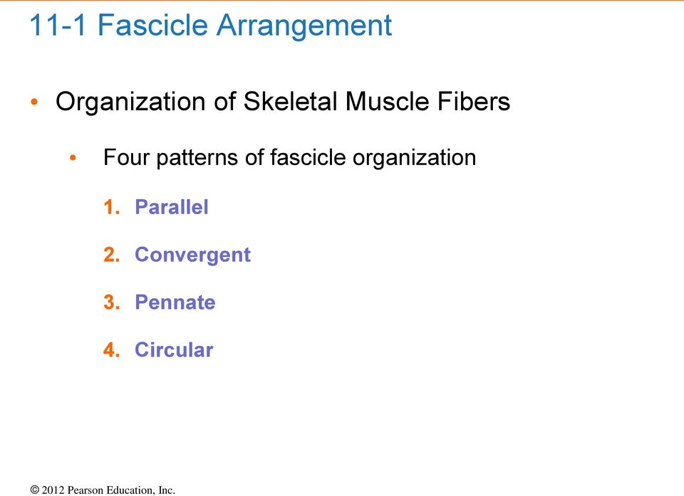 Fibers Four patterns of fascicle