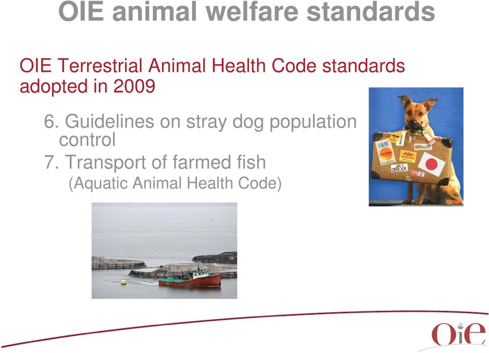 Guidelines on stray dog population control 7.