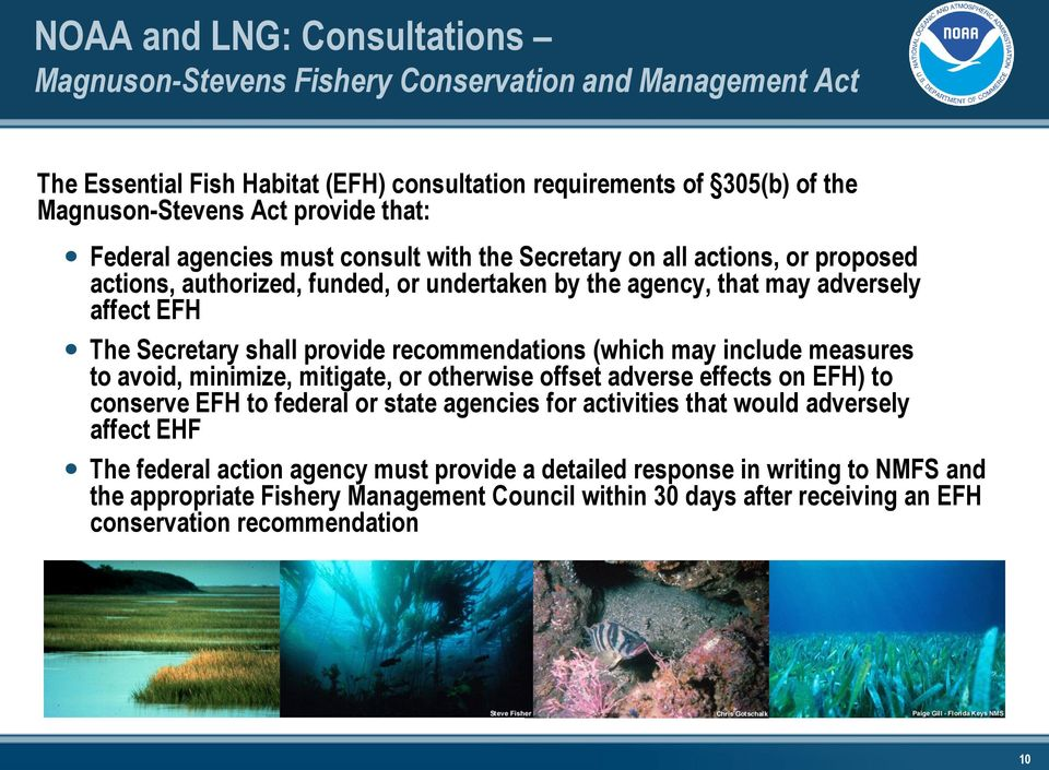 recommendations (which may include measures to avoid, minimize, mitigate, or otherwise offset adverse effects on EFH) to conserve EFH to federal or state agencies for activities that would