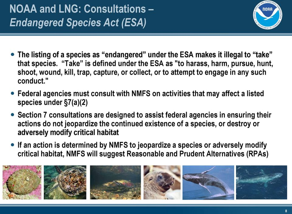 """ Federal agencies must consult with NMFS on activities that may affect a listed species under 7(a)(2) Section 7 consultations are designed to assist federal agencies in ensuring their"