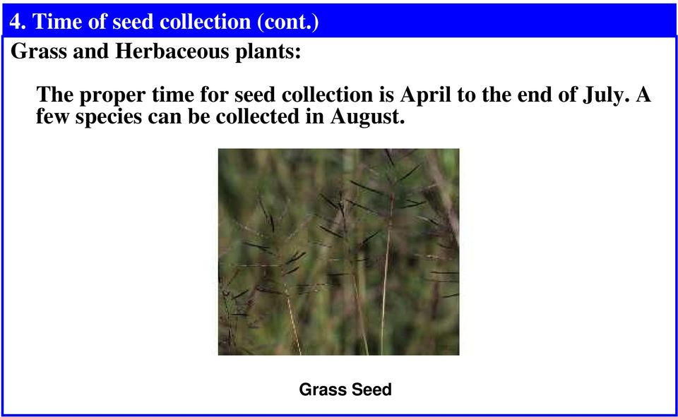 time for seed collection is April to the end