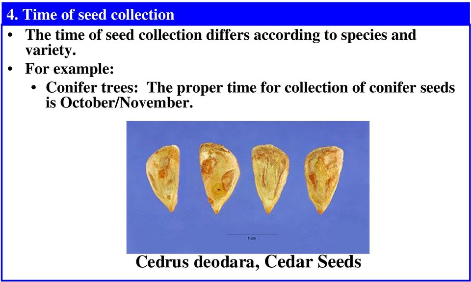 For example: Conifer trees: The proper time for