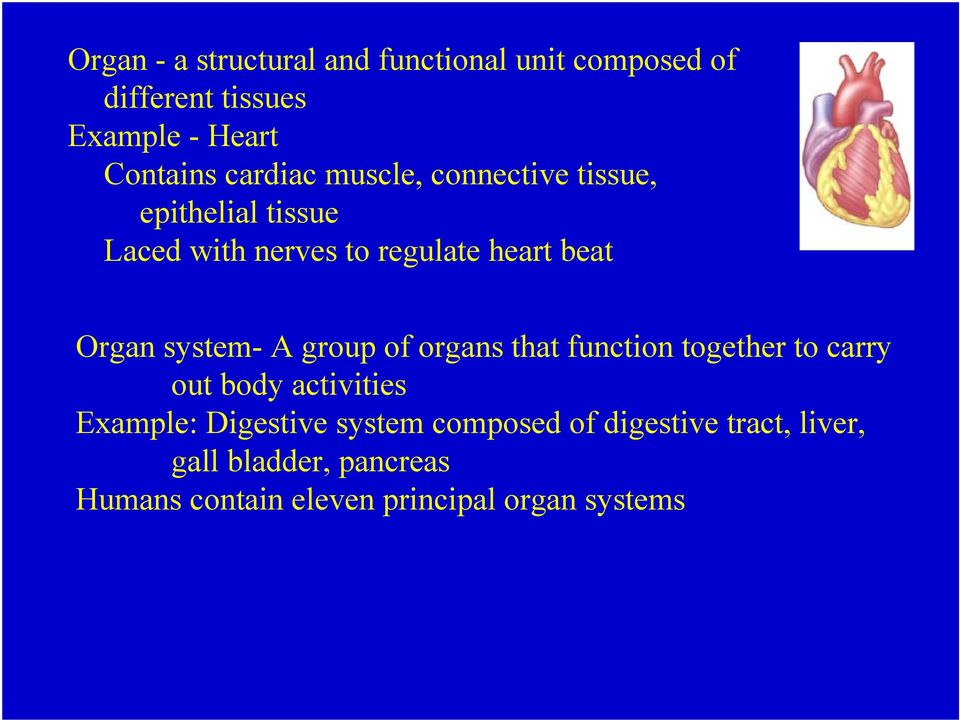 system- A group of organs that function together to carry out body activities Example: Digestive