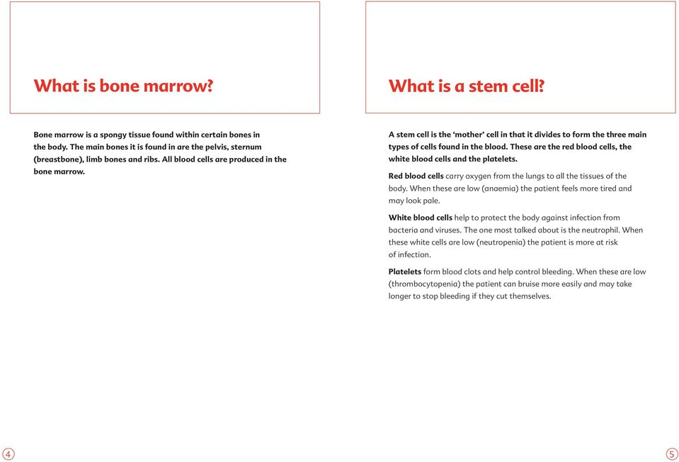 A stem cell is the mother cell in that it divides to form the three main types of cells found in the blood. These are the red blood cells, the white blood cells and the platelets.