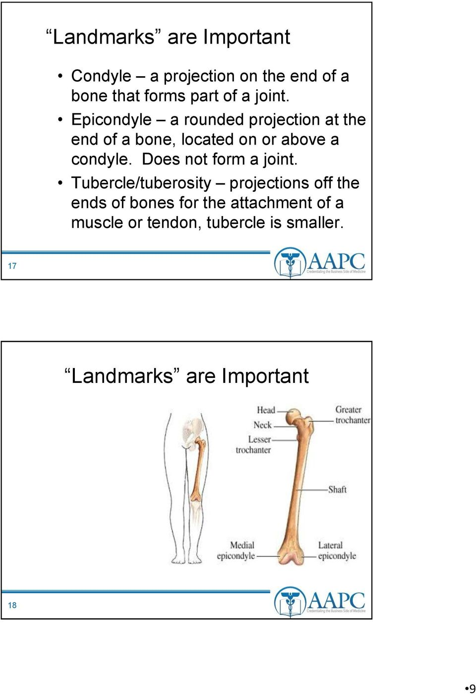 Epicondyle a rounded projection at the end of a bone, located on or above a condyle.