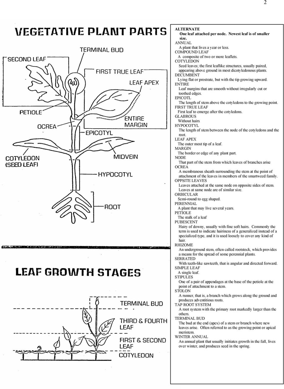 ENTIRE Leaf margins that are smooth without irregularly cut or toothed edges. EPICOTL The length of stem above the cotyledons to the growing point.