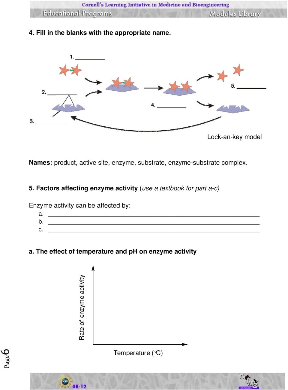 worksheet Enzyme Activity Worksheet activity sheets enzymes and their functions pdf complex 5