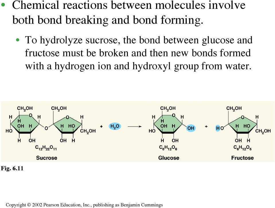 To hydrolyze sucrose, the bond between glucose and fructose