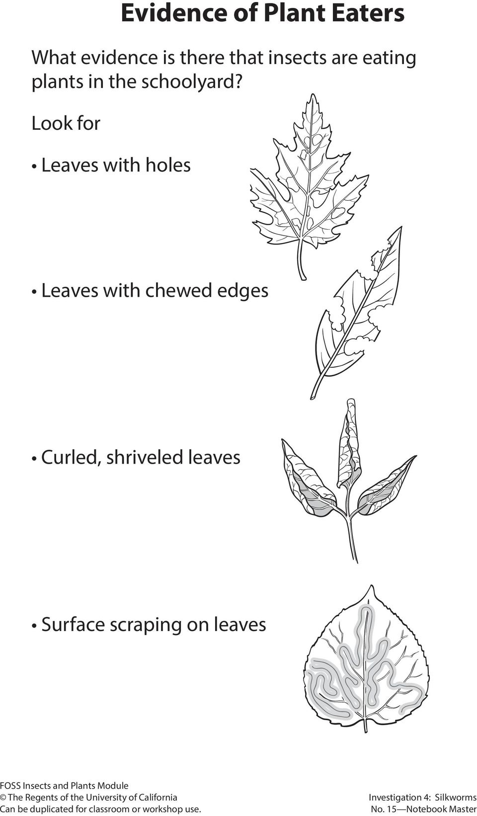 Look for Leaves with holes Leaves with chewed edges Curled,