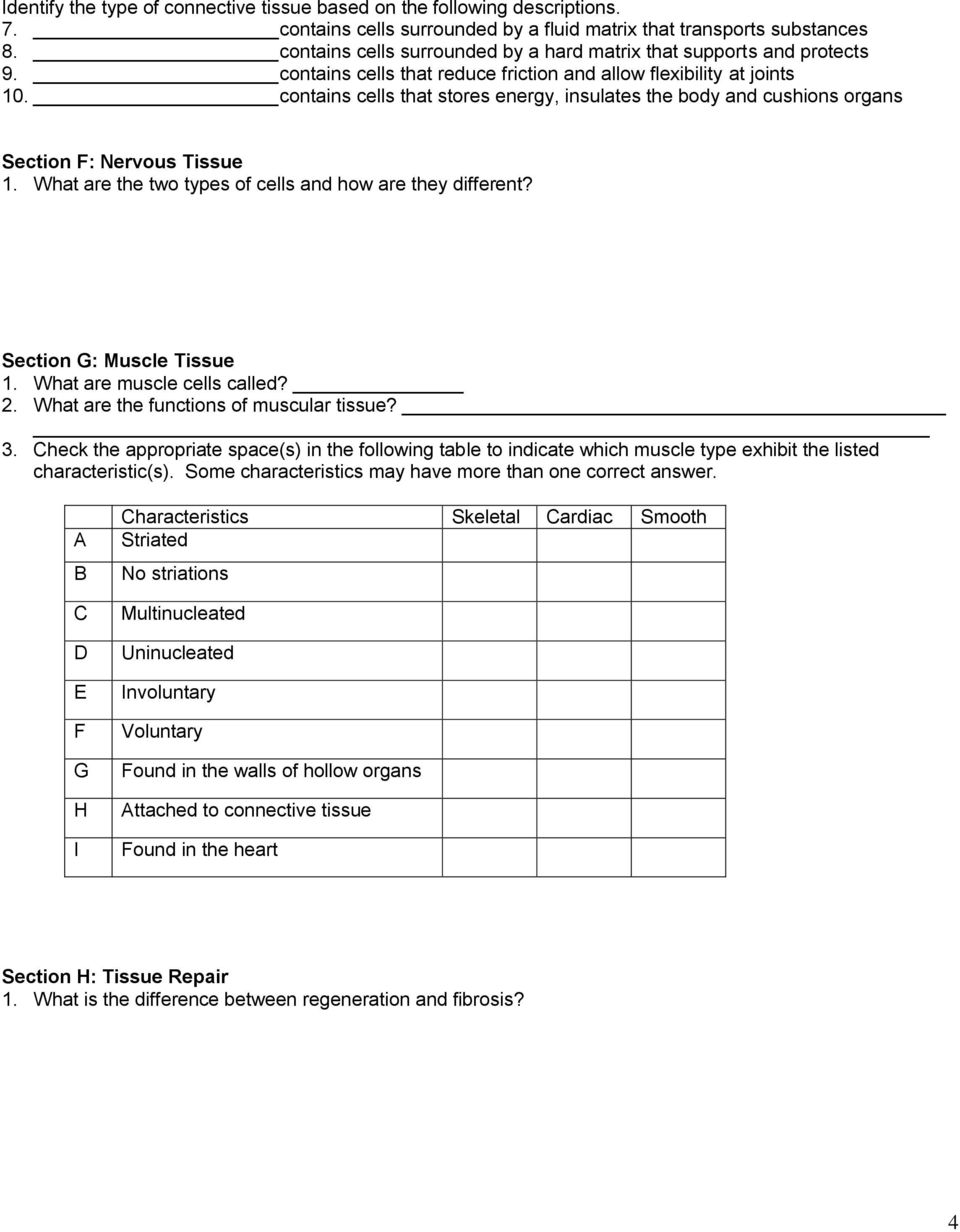 worksheet Tissue Worksheet Answers section b epithelial tissue 1 where are tissues found contains cells that stores energy insulates the body and cushions organs f nervous