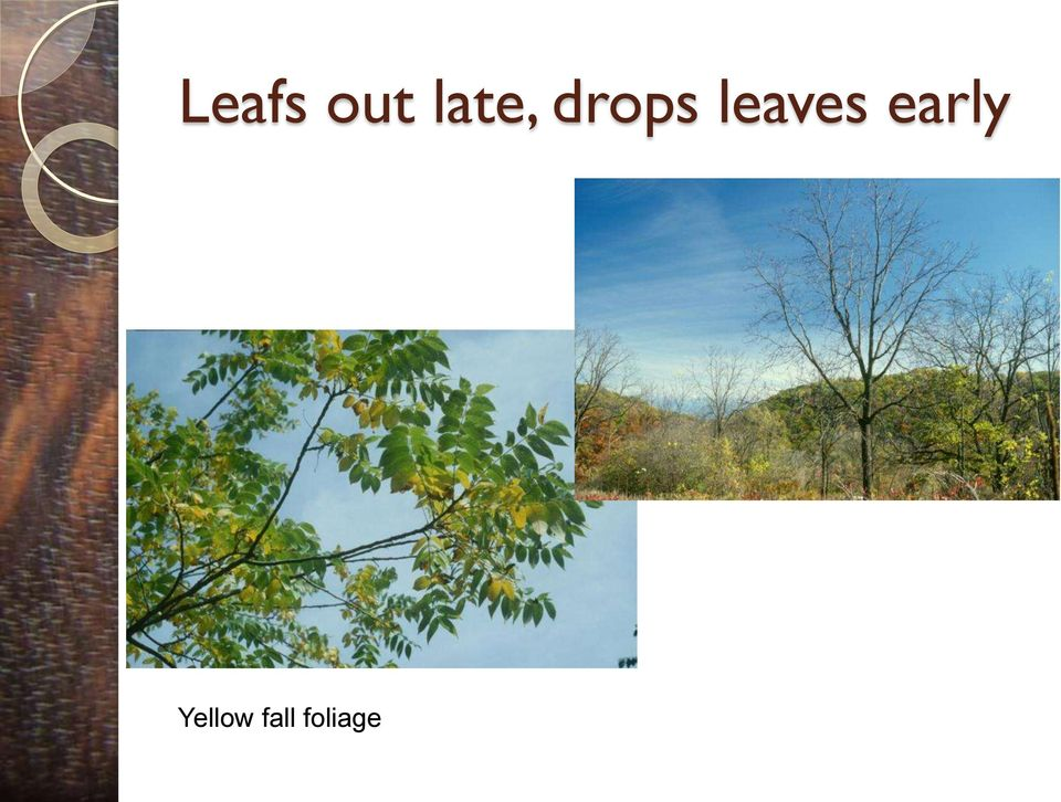 leaves early