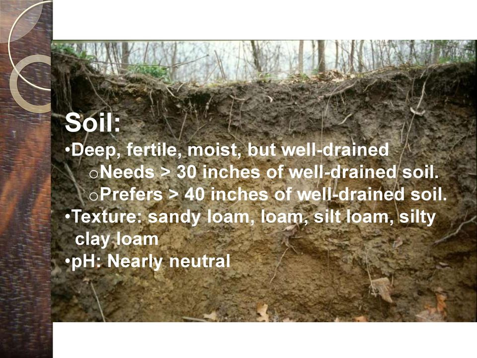 oprefers > 40 inches of well-drained soil.