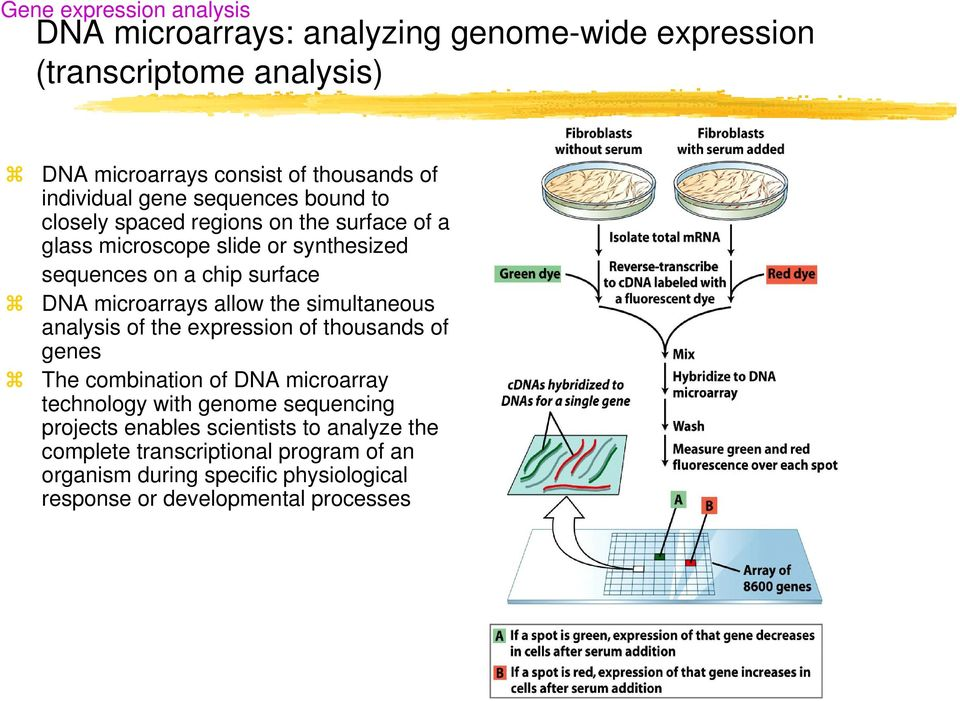microarrays allow the simultaneous analysis of the expression of thousands of genes The combination of DNA microarray technology with genome