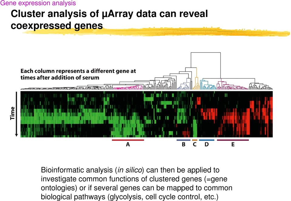 investigate common functions of clustered genes (=gene ontologies) or if
