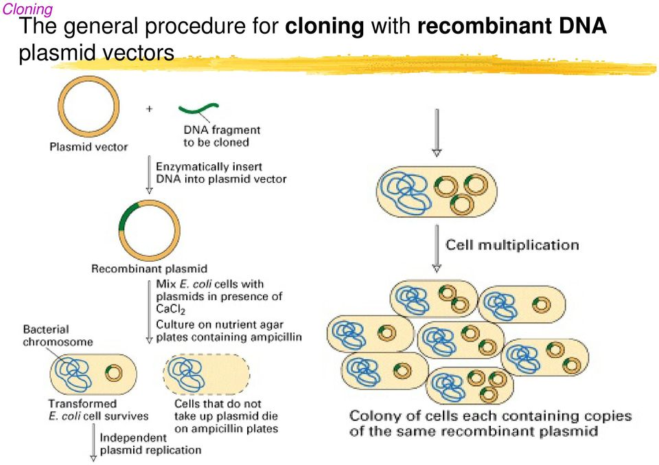 cloning with