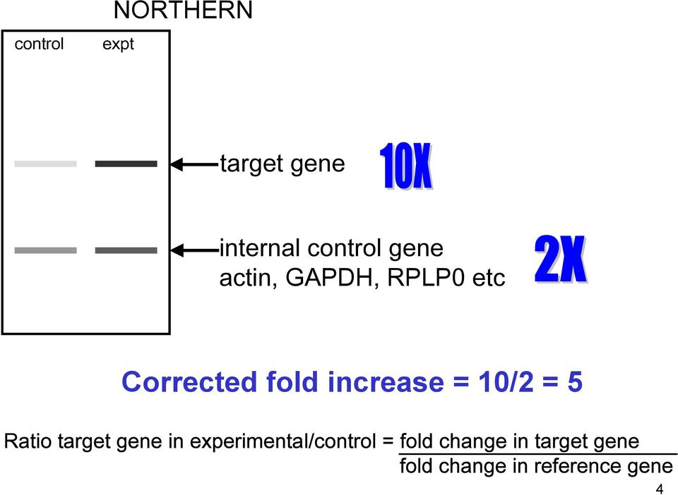10/2 = 5 Ratio target gene in experimental/control =