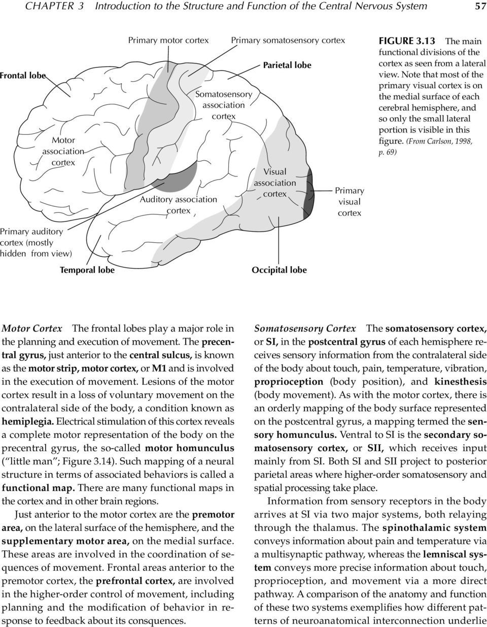 Note that most of the primary visual is on the medial surface of each cerebral hemisphere, and so only the small lateral portion is visible in this figure. (From Carlson, 1998, p.