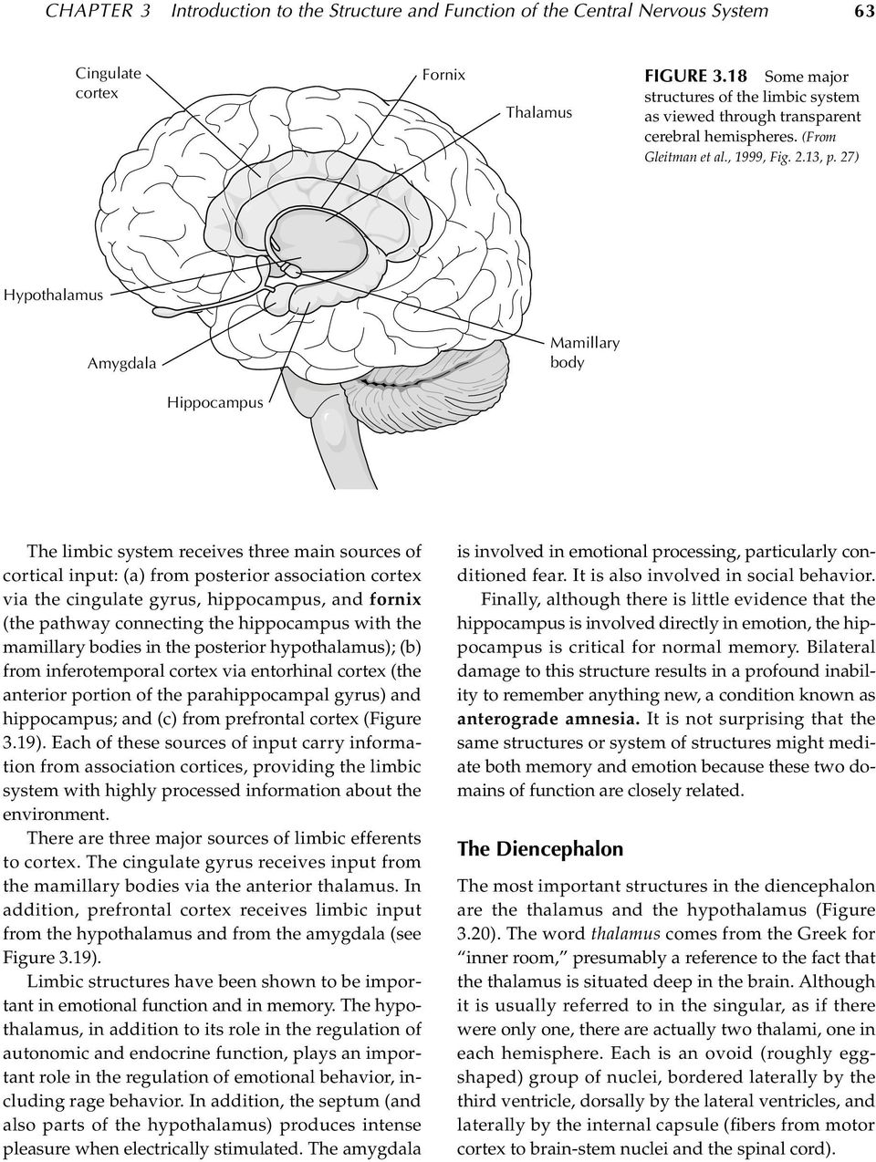 27) Hypothalamus Amygdala Mamillary body Hippocampus The limbic system receives three main sources of cortical input: (a) from posterior association via the cingulate, hippocampus, and fornix (the