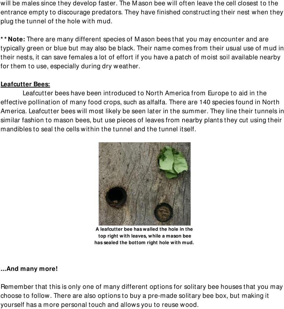 **Note: There are many different species of Mason bees that you may encounter and are typically green or blue but may also be black.
