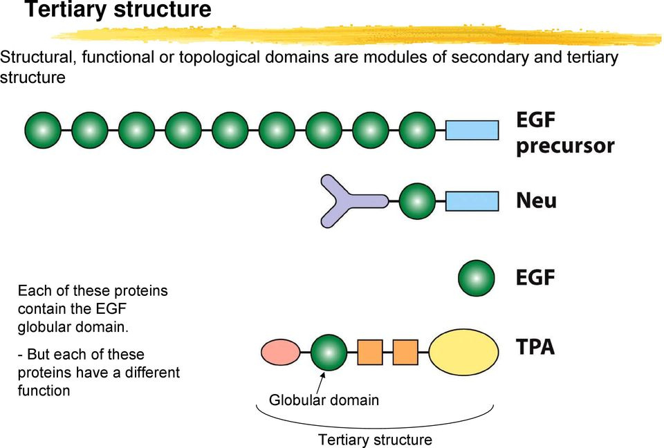 proteins contain the EGF globular domain.