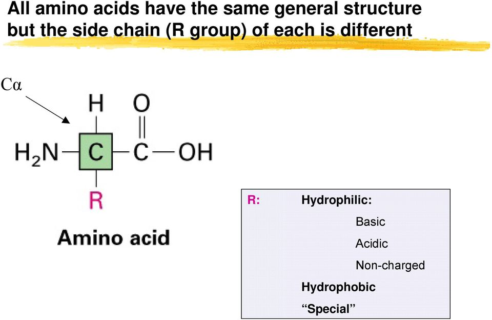 of each is different Cα R: Hydrophilic: