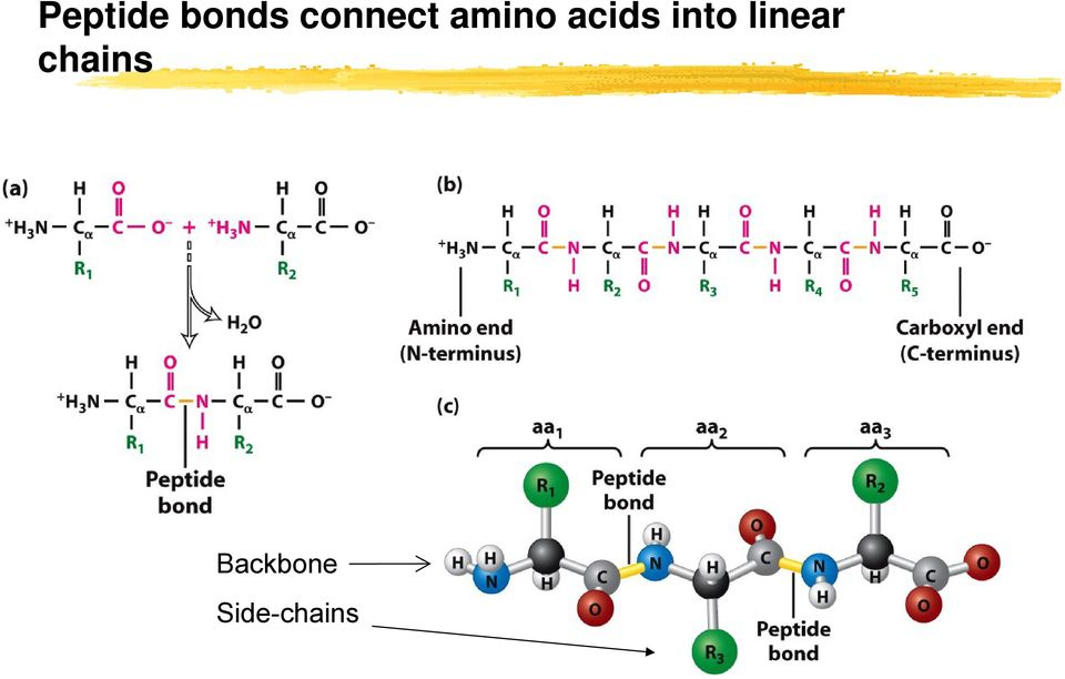 acids into linear