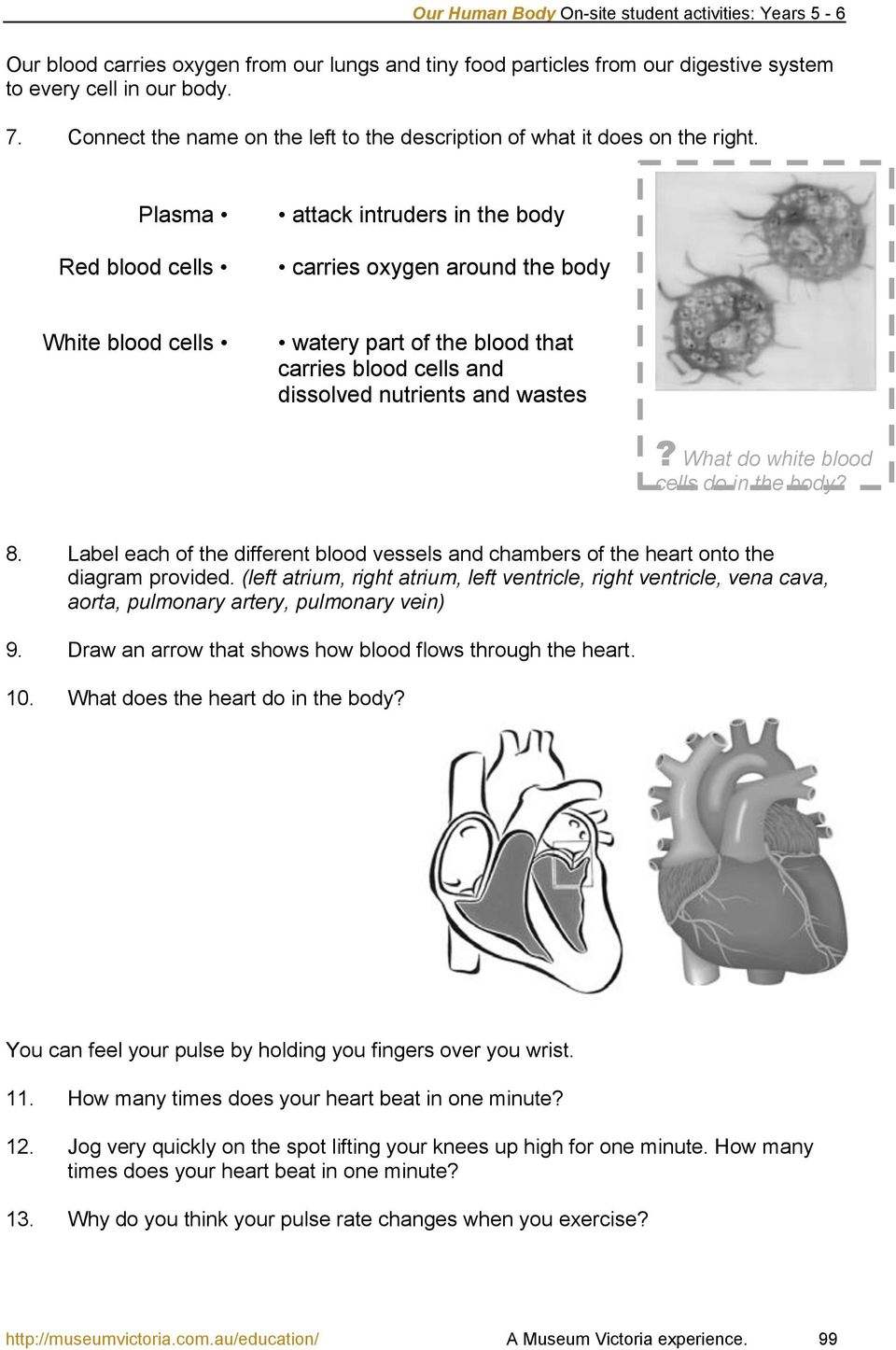 What do white blood cells do in the body? 8. Label each of the different blood vessels and chambers of the heart onto the diagram provided.