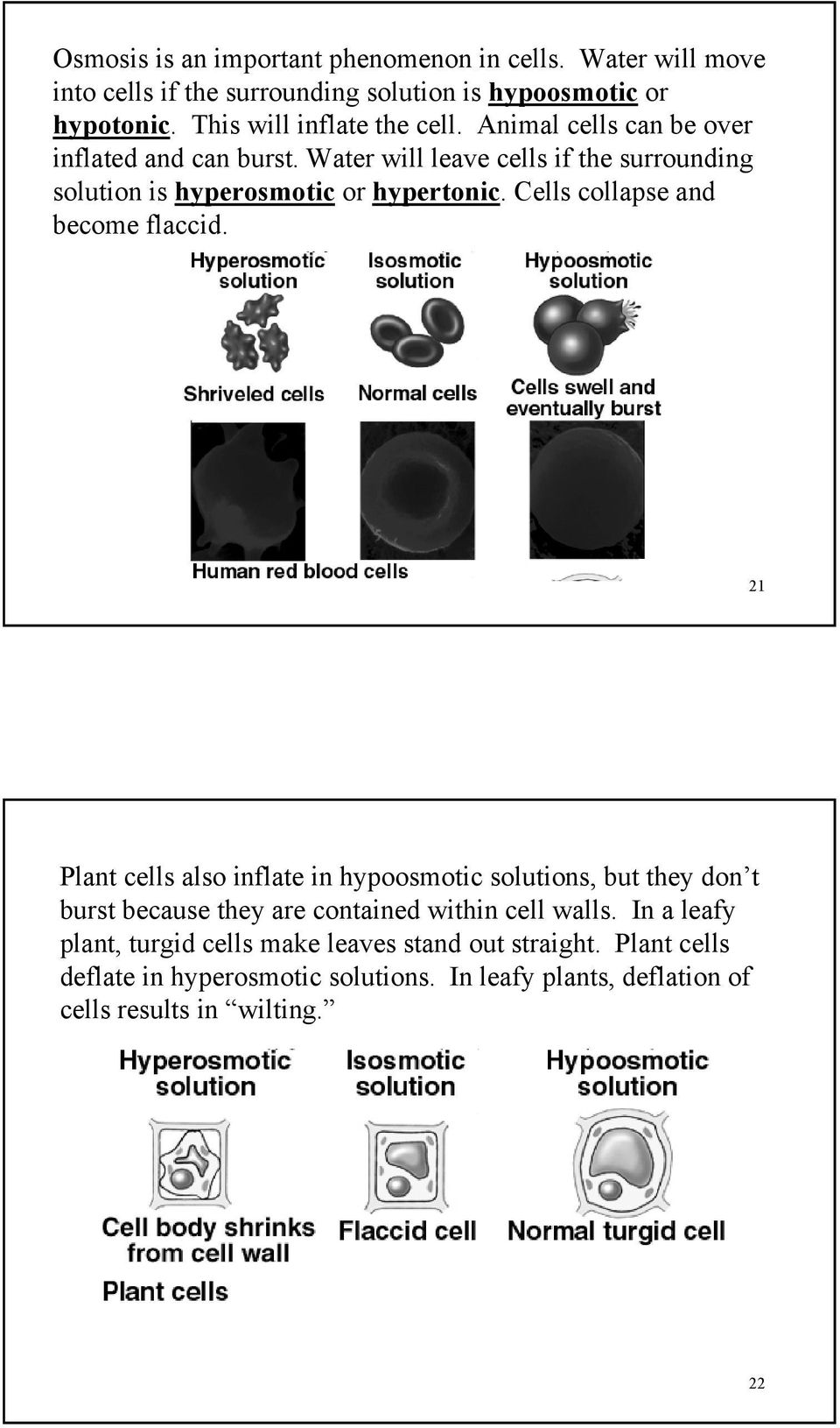 Water will leave cells if the surrounding solution is hyperosmotic or hypertonic. Cells collapse and become flaccid.