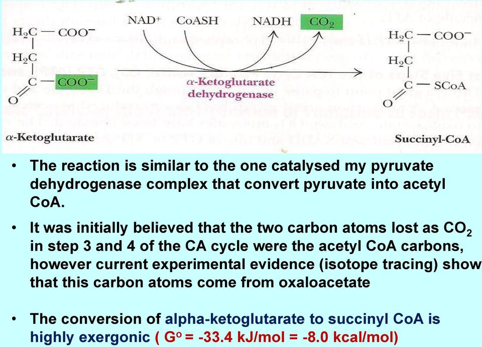 acetyl CoA carbons, however current experimental evidence (isotope tracing) show that this carbon atoms come from