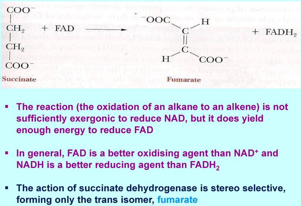 better oxidising agent than NAD + and NADH is a better reducing agent than FADH 2 The