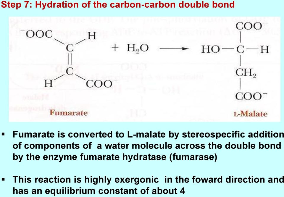 the double bond by the enzyme fumarate hydratase (fumarase) This reaction is