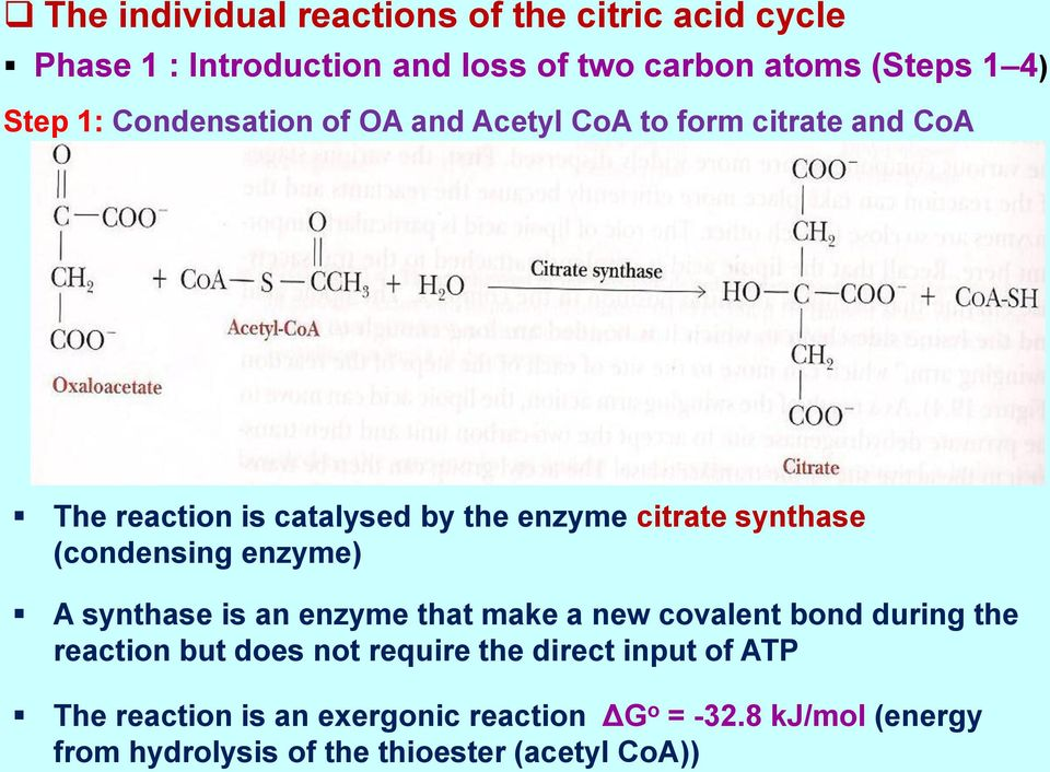 (condensing enzyme) A synthase is an enzyme that make a new covalent bond during the reaction but does not require the