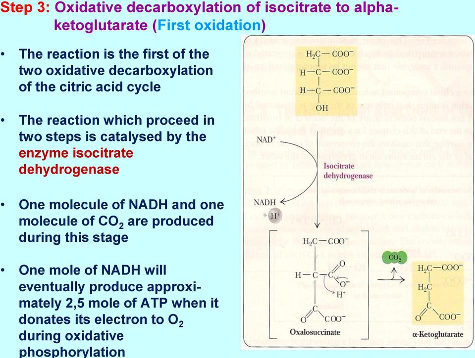 reaction is the first of the two oxidative decarboxylation of the citric acid cycle The reaction which proceed in two